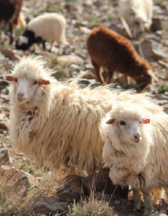 羊毛のこと